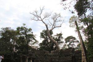 Templi-di-Angkor-Cambogia-45-Zainoinspalla.org_